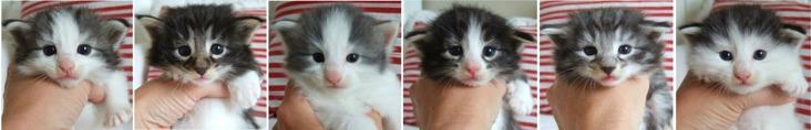 tre veckor gamla / three weeks old
