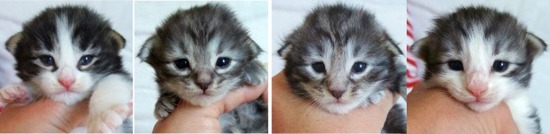 två veckor gamla / two weeks old