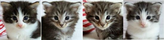 fyra veckor gamla / four weeks old