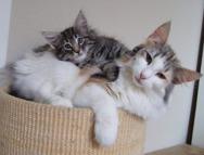 Athena & Kassis