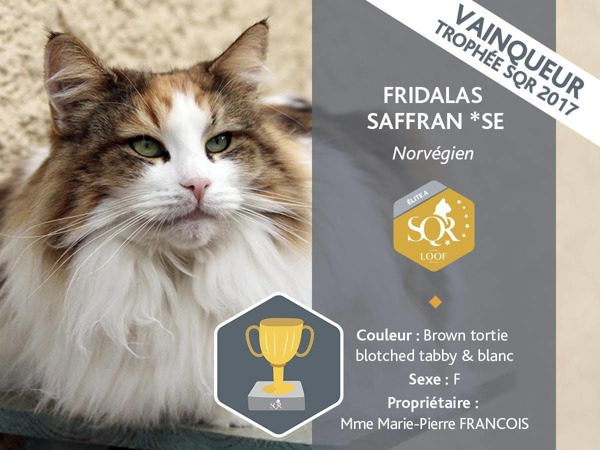 - S*Fridalas Saffran, bästa avelskatt i Frankrike 2017