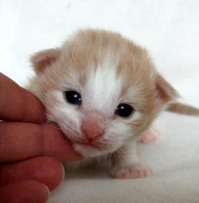 S*Fridalas Nemo, 2 weeks old