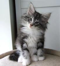 S*Fridalas Posse, 9 weeks old