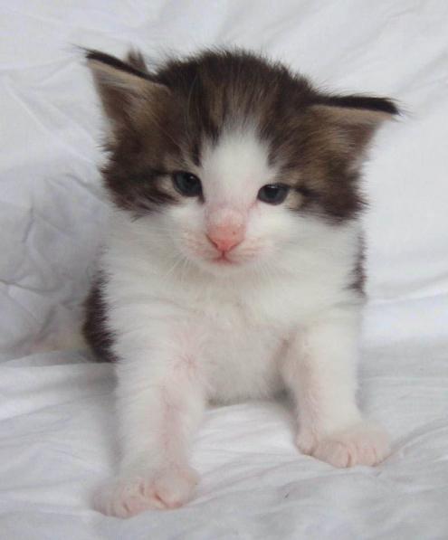 S*Fridalas Kokos, 4 weeks old