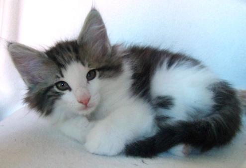 S*Fridalas Kokos, 8 weeks old