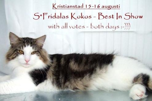 S*Fridalas Kokos Norsk Skogkatt Best In Show
