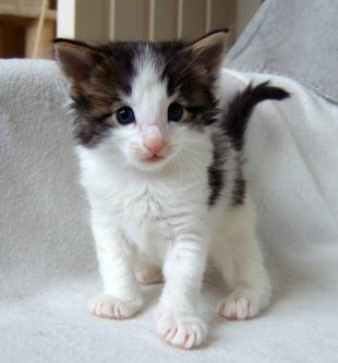 Rocky, 4 veckor - så social och nyfiken ;-)