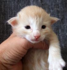 Tristan, 2 veckor gammal