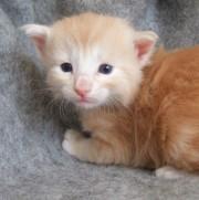 Tristan, 3 veckor