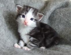 Titan, 3 veckor gammal