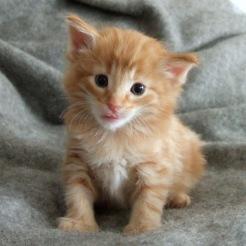 Tyson, 4 veckor gammal