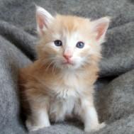Tristan, 4 veckor