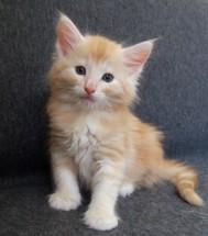 Tristan, 6 veckor