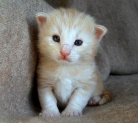 Keliga Kasper, 3 veckor gammal
