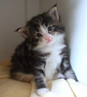 en av Iskas kattungar......