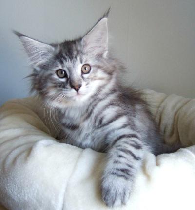 S*Fridalas Toffee, 11 weeks old