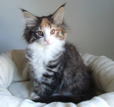 S*Fridalas Tryffel, 11 weeks old