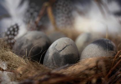 Fågelägg betong