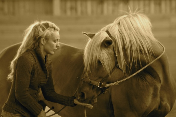 Longreing is a fun and engageing way of educating your horse and prepare for riding.