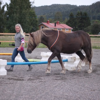 ABC om hästens inlärning Ånge 11/1 2019 -