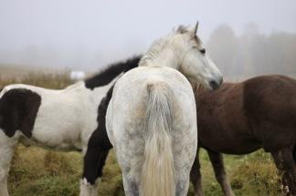 Hästens emotioner Östersund 26/1 2019 -