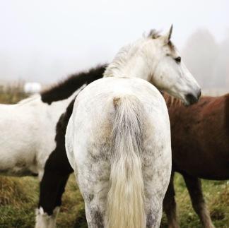 Hästens emotioner Mölntorps Gård, Ärla 29/1 2019 -