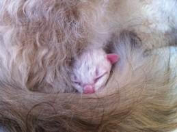 sleepin' in mom's curls