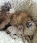 Lilla Ny (Cixous) med mamma Vita och halvsyster Nica