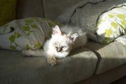 Älskar sol...