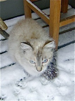 Icy cat