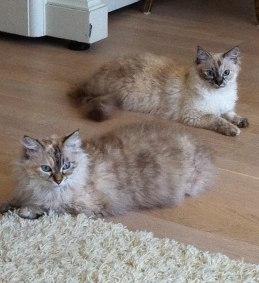 Isa and Vita