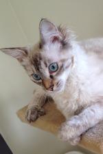 Min vackra Cixous!