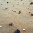 Söder om Kolonivägen är stranden numera stenig.13-10-29-1