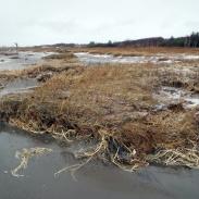 Urgröpt strandhed i Skummeslöv. 13-12-07