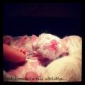 Nyfödda småttingar
