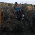 Hundarna och Kristin åker hölass