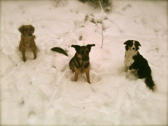 Snälla hundar poserar när mattar fotar :)