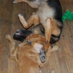 Siri & Keiko 447