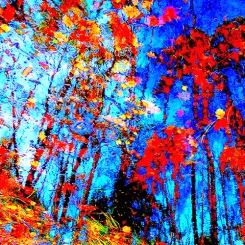 "Fotografisk konst / Fototavla  ""OCTOBER 2""  (Format 1X1)"