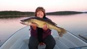 2013års största gös 6,6 kg från Storbjörken