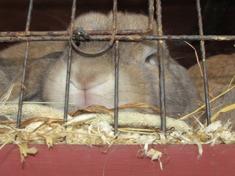 Klensmedsvägens kaniner tar en tupplur i värmen.