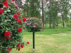 Blomträden på plats