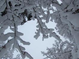 Svartå blev Vitå efter dagar av snöande.
