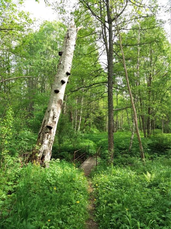 En bild från GrönaParken