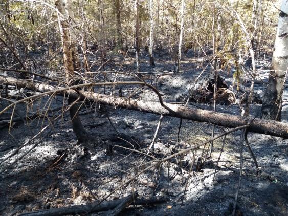 Brandområdet ca 20000 m²