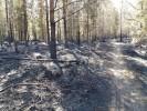 20180602 Bergslagsleden efter branden3322