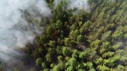 Bild Bergslagens Räddningstjänst  Branden vid Lillbjörken