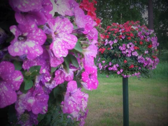 Blomträden uppsatta