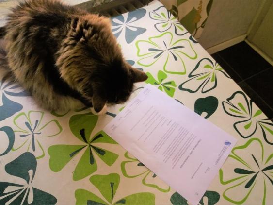 Pussel läser dagens post från kommunen..