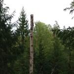 Fågelboträd